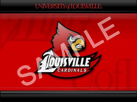 Louisville Cardinal Wallpaper