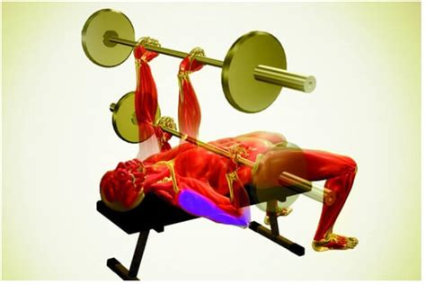 flat barbell pyramid bench the best chest exercises for men for a bigger chest