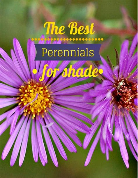 perennial flowers for shade the best perennials for shade perennials gardens and plants