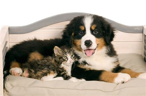 kittens and puppies for sale tag for pictures of puppies and kittens for sale cats 20and 20kittens 20dogs