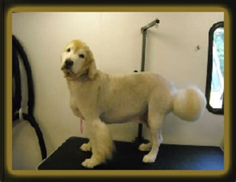 is it ok to shave a golden retriever grooming tools clockwise from left breeds picture