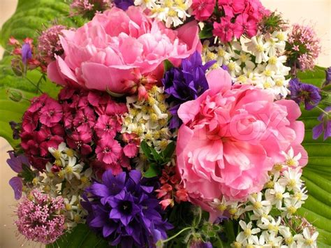 Flowers From The Garden Bunch Of Flowers From The Garden Stock Photo Colourbox