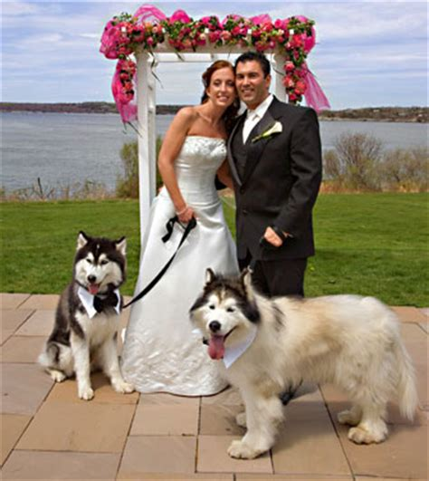 puppy wedding pet clothing photo gallery