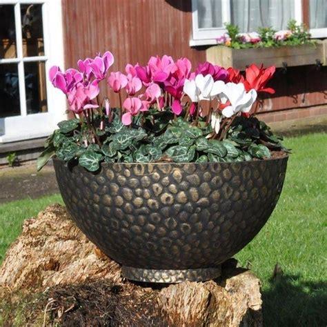 cura ciclamino in vaso ciclamino cura piante da interno come curare il ciclamino