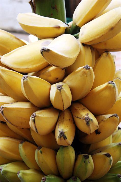 kebun pisang pisang kepok kalimantan