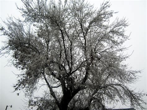 frosty tree frosty tree by xtorilynnx on deviantart