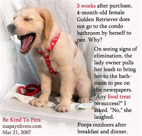 how to train your dog to use bathroom outside how to bathroom train a puppy 28 images how to train