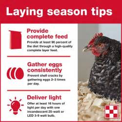 8 Tips On Caring For Chickens by 134 Best Hen Care Images On Chicken Coop Run