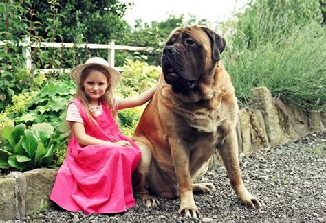 types of big dogs largest breeds breeders guide