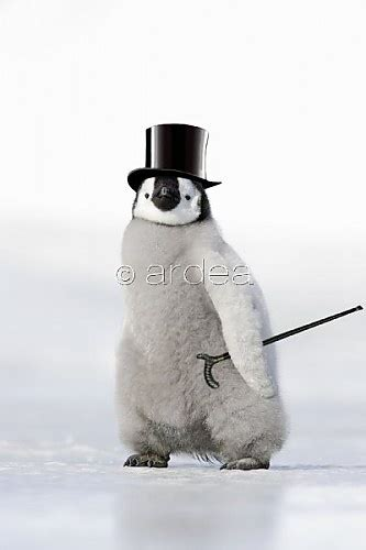 Top Pingun 10 best ideas for penguin images on
