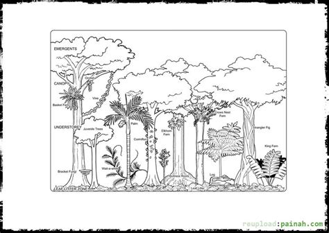 Easy Rainforest Coloring Pages by Easy Rainforest Coloring Pages Www Pixshark Images