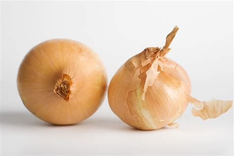 dogs onions toxic foods toxicity in dogs and cats