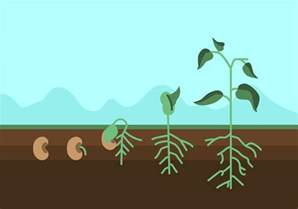 vector plant growth cycle download free vector art stock graphics images