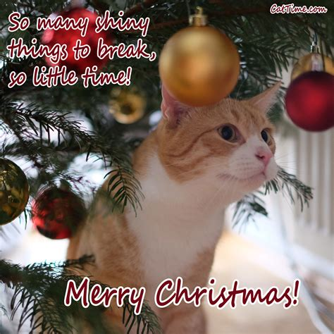 cat christmas cards   share   friends  family cattime