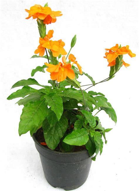 aboli flower flower inspiration