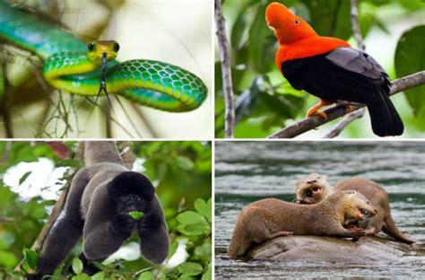 imagenes de animales nativos del peru animales del per 250 imagui