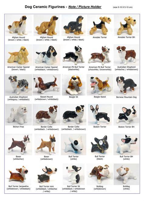 Dog breeds a afghan hound page 11