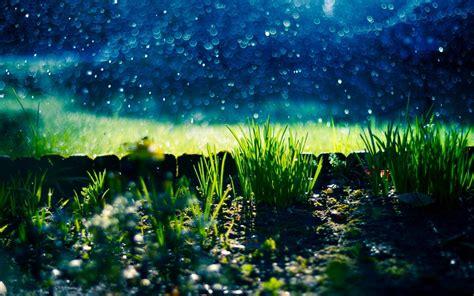 nature grass green stones bokeh blur background wallpaper