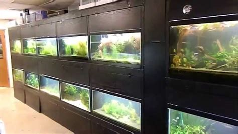 aquascape store hawaii fish stores aquascapes youtube