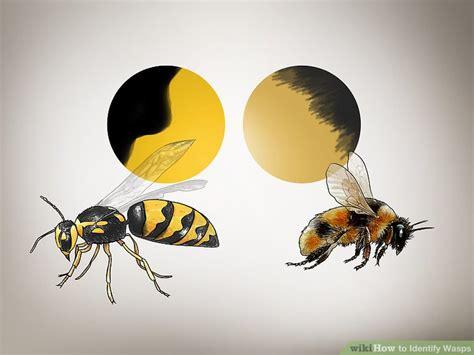visitor pattern c black wasp 3 ways to identify wasps wikihow