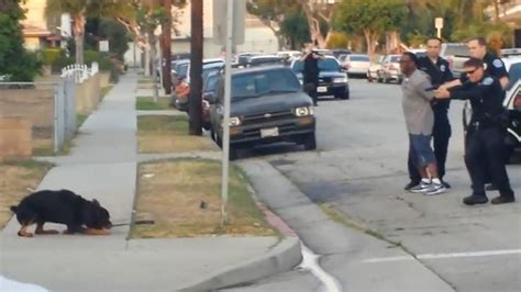 dead rottweiler california cops shoot rottweiler dead in front of owner rosby newsday