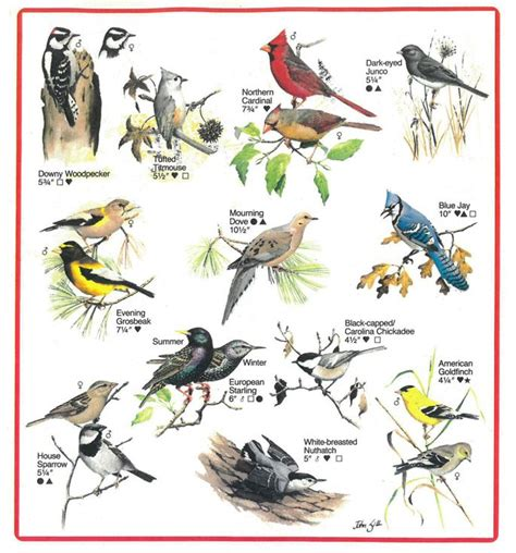 34 best bird crafts activities images on pinterest bird