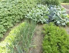 Bewerbung Anlagen Nebeneinander Welche Gem 252 Sesorten Nebeneinander Pflanzen