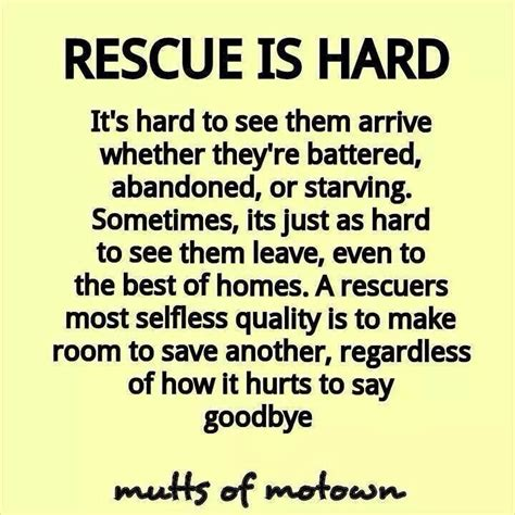 rescue quotes best 25 animal rescue quotes ideas on rescue quotes save animals and
