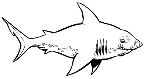 coloring page for shark shark coloring pages print coloring pages