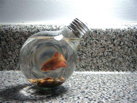 Do Betta Fish Need Light by Jackson Upcycling