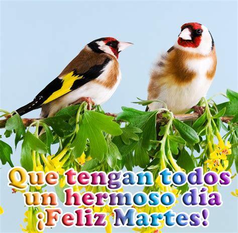 imágenes de feliz martes de navidad 66 best images about martes on pinterest dios humor