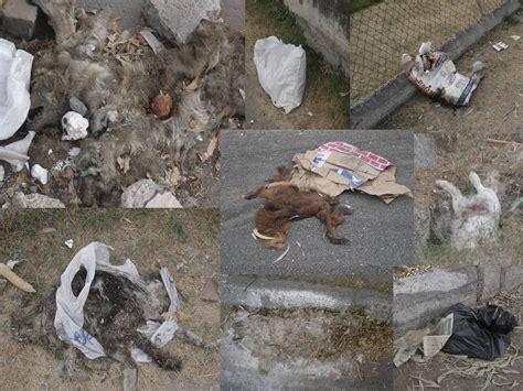 imagenes animales muertos si has pensado en abandonarlo aqu 237 tienes su final taringa