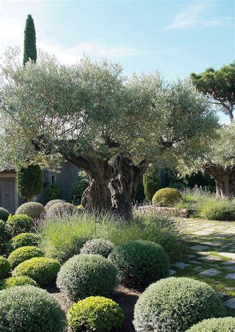 olive garden colorado