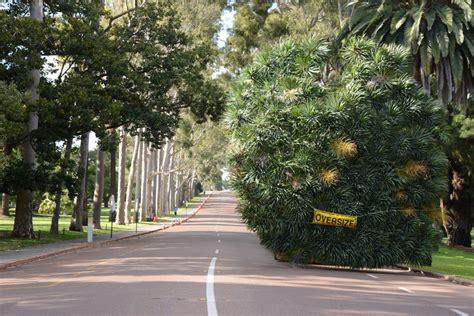 Botanic Gardens And Parks Authority Botanic Gardens And Parks Authority Tree Relocated