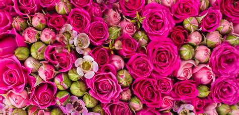 enchanted rose that lasts a year real life enchanted rose stays fresh for years style