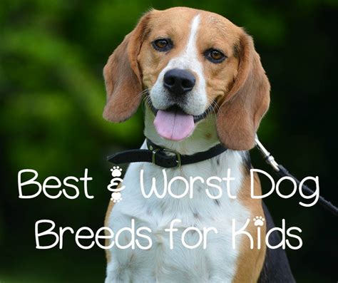 worst breeds best and worst breeds for dogvills