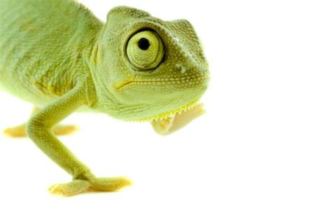 fotos animales reptiles 17 best images about fotos de r 233 ptiles petclic on