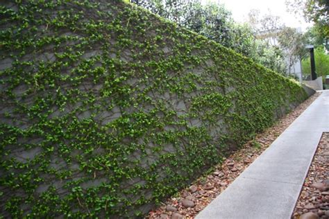 best climbing plants for fences fiona brockhoff design 187 goodwin jaensch concept plan