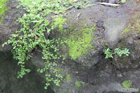 moss graffiti guerrilla gardening recipe