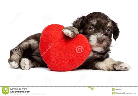 valentines puppy valentines dogs www imgkid the image kid has it