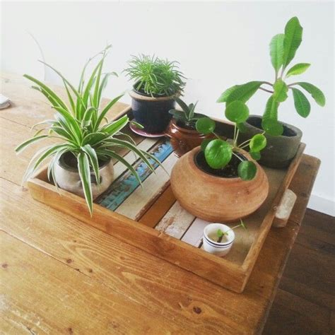 Dining Table Plants These Plants On A Wooden Tray On Our Dining Table Make Me Happy Plants Flowers
