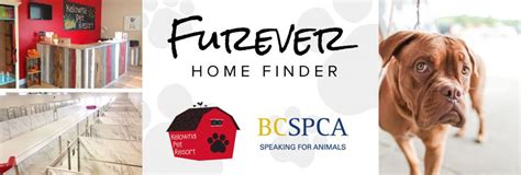 kelowna pet resort furever home finder nigel