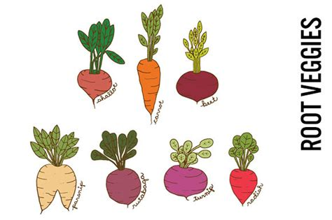 root vegetable images free tree and root photo psd 187 designtube