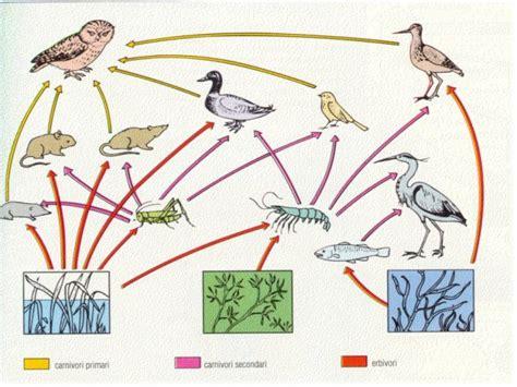catena alimentare nel bosco l inquinamento che ci fa stupidi anglotedesco