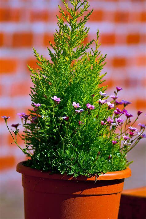 Arbuste En Pot Pour Terrasse 7984 by Planter Un Arbuste En Pot