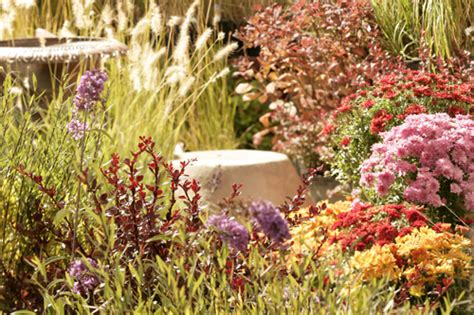 high desert landscaping ideas frugal home design