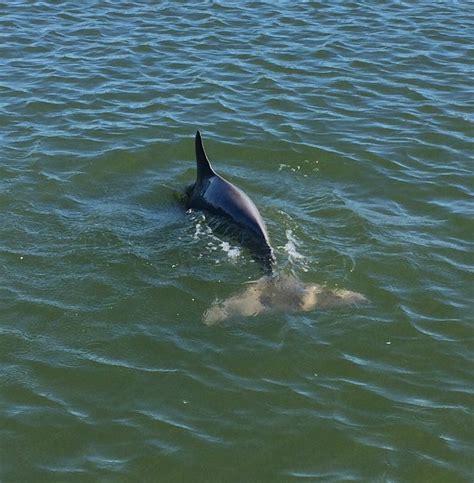 orlando boat tours dolphin watching boat tours orlando daytona beach new