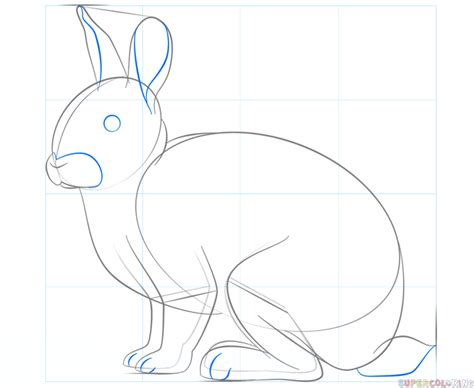 how to a rabbit how to draw a rabbit www imgkid the image kid has it