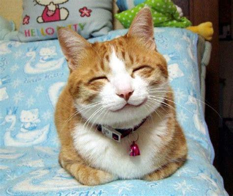 los gatos vuelven a casa un viejo gato azul los gatos que se escapan