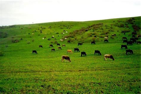 Metode Aborsi Padang Go Livestock Laporan Praktikum Manajemen Padang